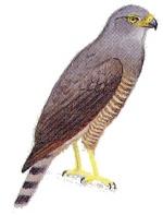 costa rican natural history janzen pdf